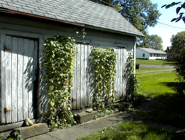 Shed_1